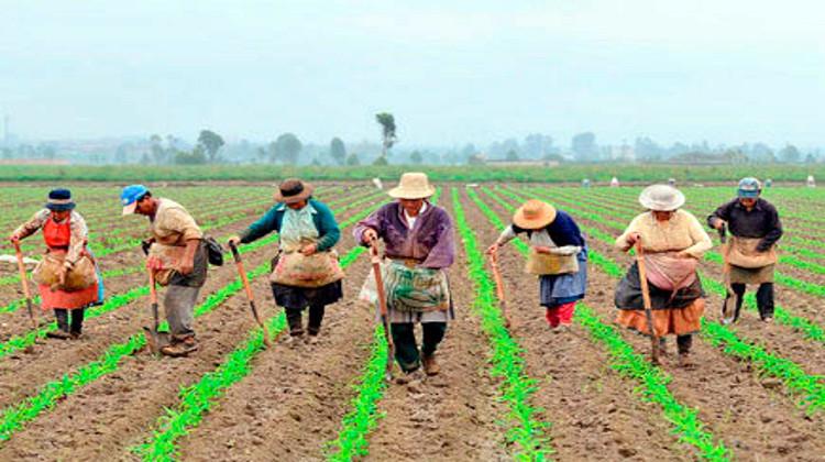 Reforma rural integral y sustitución de cultivos de uso